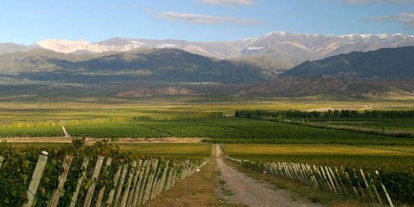 San Juan es tierra de vinos