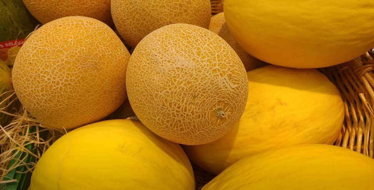 melones cantalupo