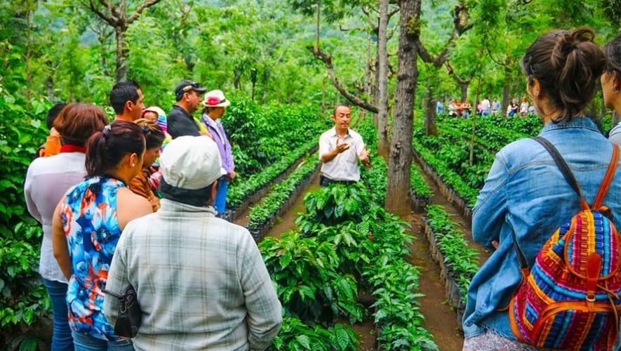 la ruta del café de guatemala