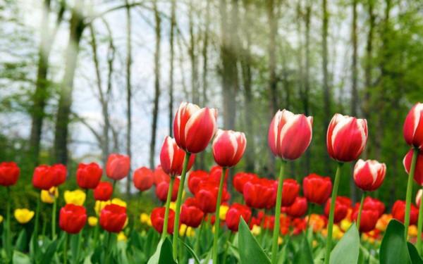 Espectaculares Paisajes con flores de colores muy bonitas
