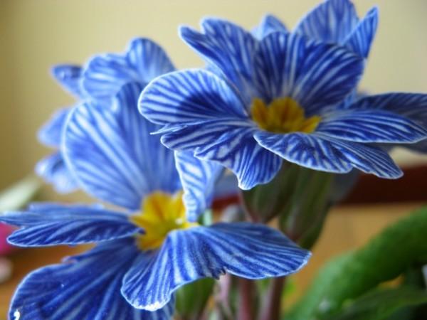 Hermosas imgenes de flores exoticas y nativas