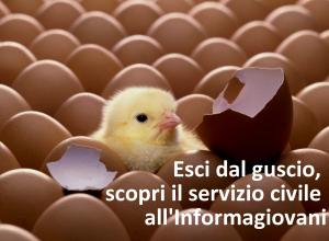 pulcino-uovo-schiuso_esci-dal-guscio