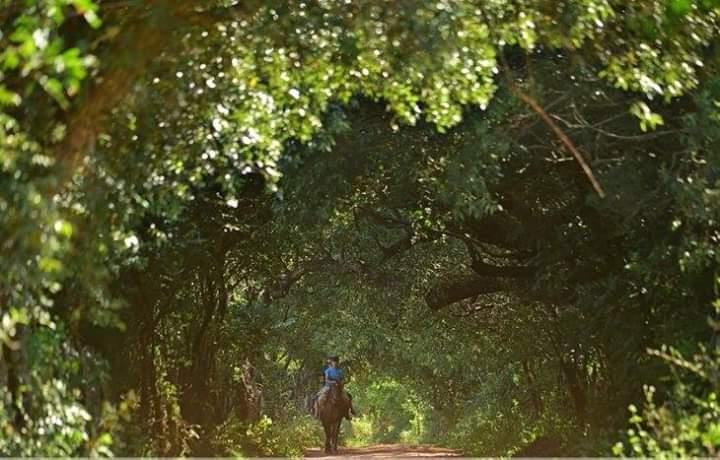 FB_IMG_1541444009796 Túnel Verde de Misiones invita a un escape gratuito del estrés
