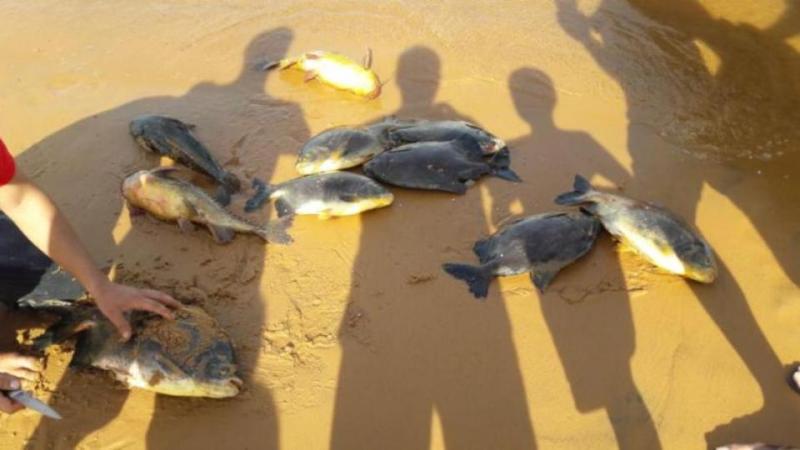 7-foto-3 Revelan por qué se produjo la mortandad de peces cerca de la represa Yacyretá