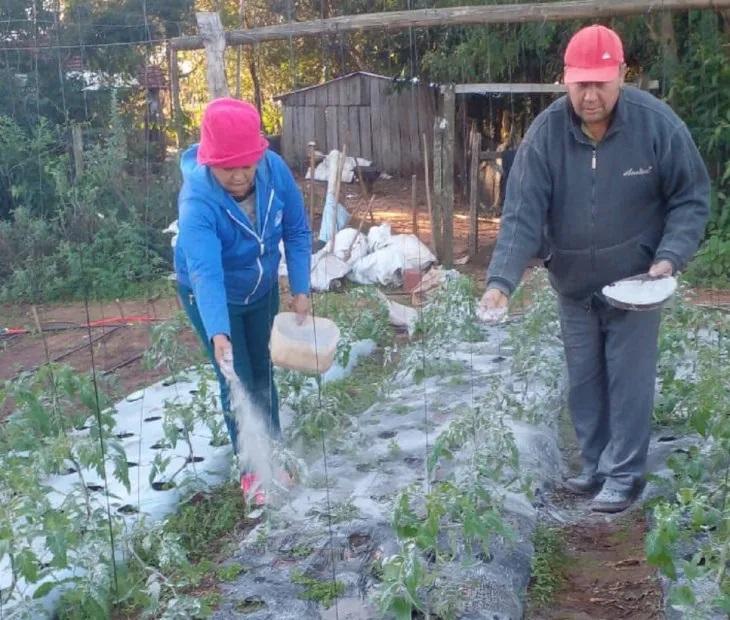 productores-se-las-ingenian-proteger-cultivo-heladas Productor combate heladas con cenizas para sus cultivos