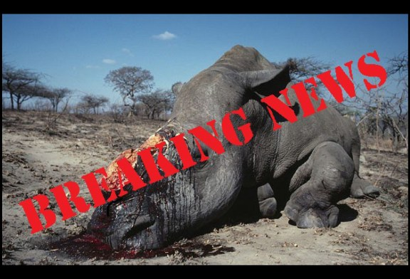 Poachers kill two rhinos in Etosha