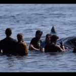 Whale rescue at Independence Beach