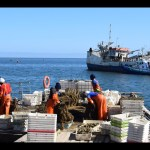 White mussel harvesting near Walvis Bay suspended