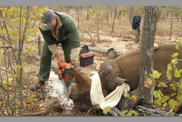 Outjo rhino horn thieves denied bail