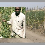 Ancestral farming knowledge revived to improve crop production