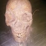 Human skull discovered at Eefadoukadona