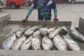 Spring tide halts good fishing along the coast