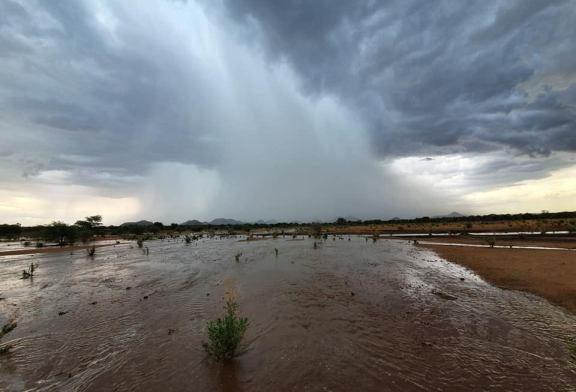 Namibians rejoice as good rains fall