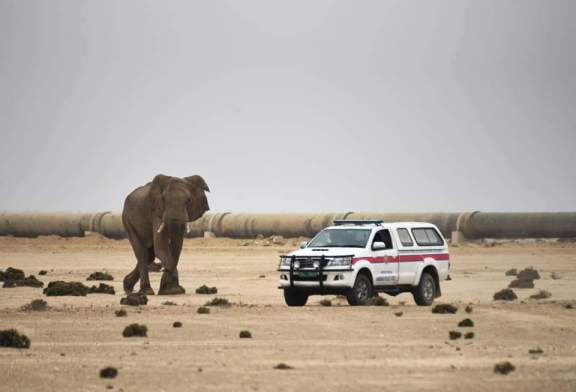 Elephant safely on its way
