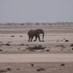 Crisis averted with Christmas elephant
