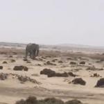 Elephant surprises residents of Swakopmund
