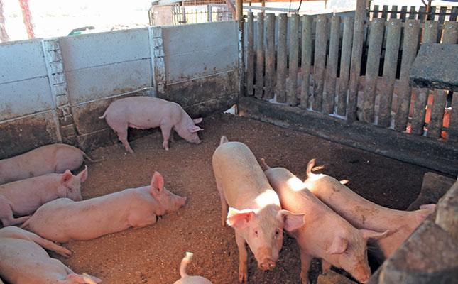 Ministry Agriculture Water alarm outbreak deadly pig virus African swine flu