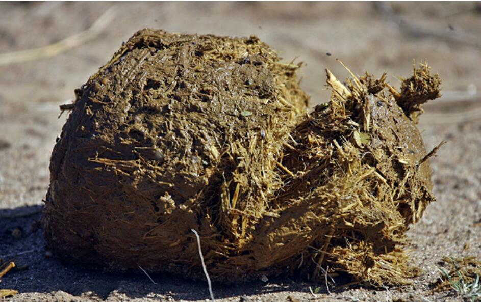 Elephant dung sales COVID-19 cure skyrocketed prices warnings