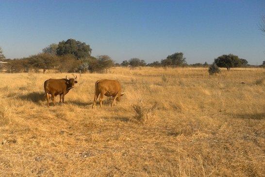 Excellent grazing but no livestock