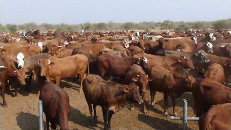 Foot-and-mouth disease detected Kavango East Ministry Agriculture Water Forestry outbreak FMD cattle