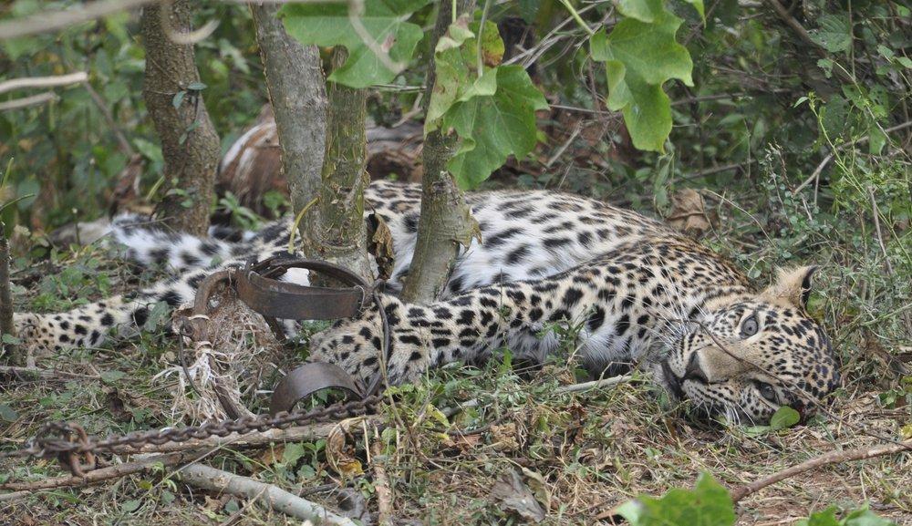 suspected poacher Claudius Hameva fatally shot game farm Okakarara