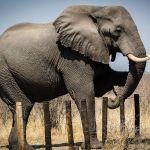 Water holes should eradicate human-wildlife conflict