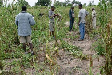 More elephants reported at Omundaungilo