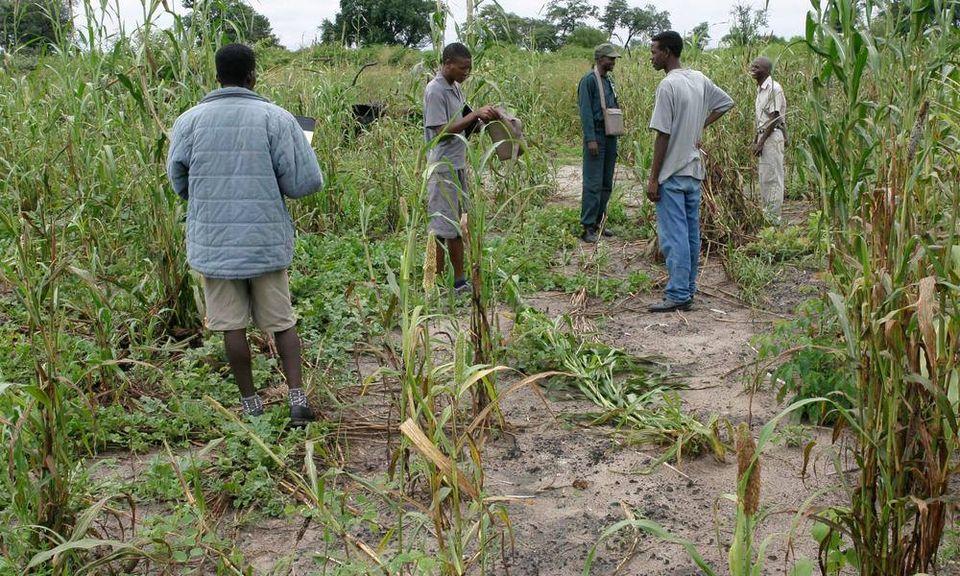 elephants reported Omundaungilo community elephants