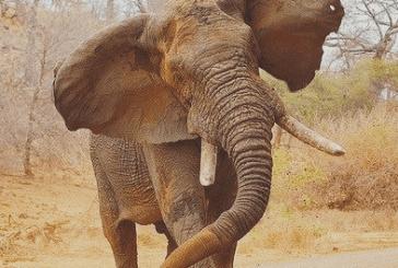 Elephant kills man in Omusati