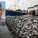 Fishing industry forced to shed 2 000 jobs soon