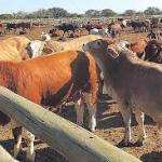 LPO addresses the USCA's concern about FMD