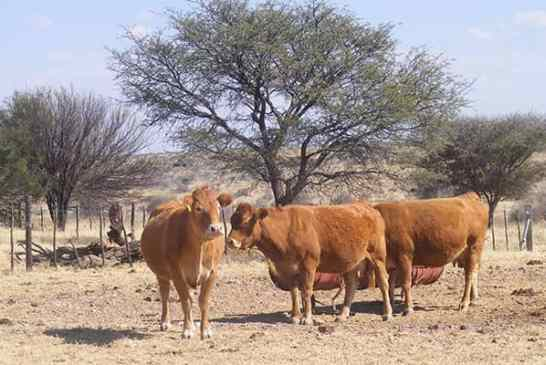 FMD restrictions lifted