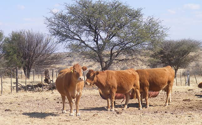FMD restrictions lifted directorate veterinary services ministry Agriculture water land reform