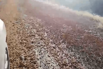 Rivers of locusts