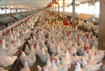 Bird flu halts poultry imports from SA