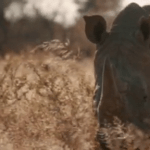 Environment ministry says Okonjima video is reckless