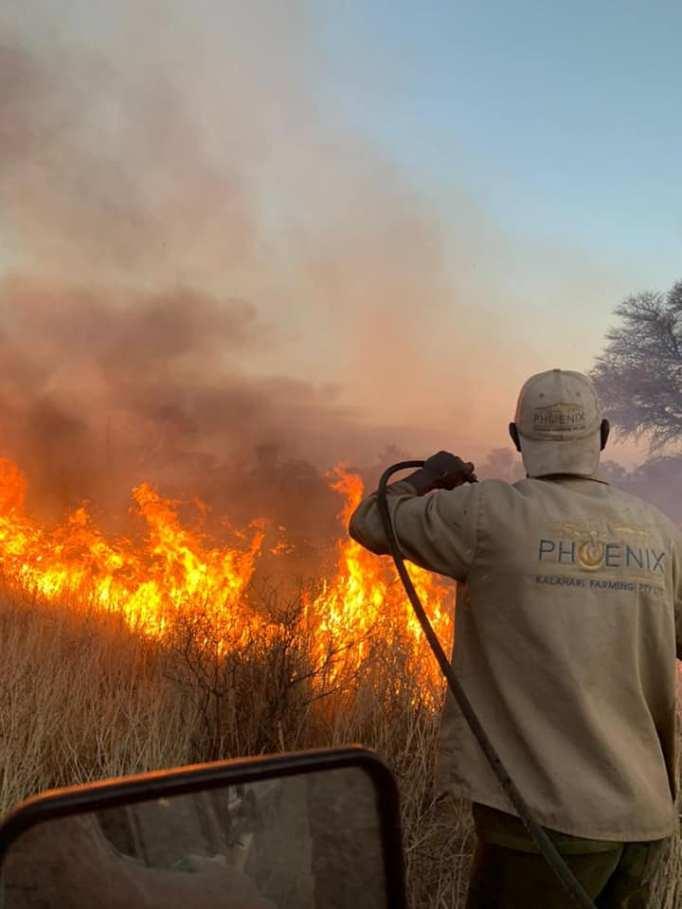 Veld fires devastate human animal lives grazing land farms forest