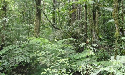 Los bosques tropicales pueden ser más resistentes a un calentamiento global moderado