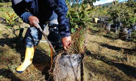 Este 6 de junio se plantarán 250 árboles en el sector El Condado