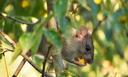 Se publica lista actualizada de especies mamíferos de Ecuador