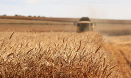 Se apuesta al desarrollo agrícola para ayudar en la reactivación económica del país