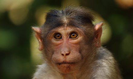 «Mamíferos del Parque Nacional Sangay» reporta registro fotográfico de especies