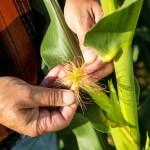 """AEI recibe apoyo de Bayer en el programa inclusivo de desarrollo agrícola """"Se puede"""""""