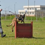 echipe canine (15)