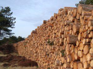 stiva lemne