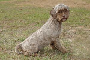 Dog-With-Human-Face-tonik2