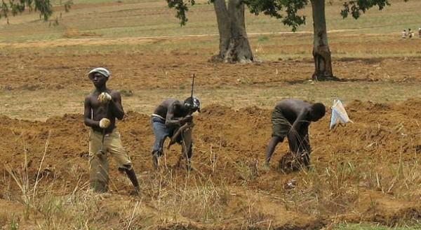 Nigerian farmers working on crops