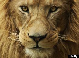LIONS3532728