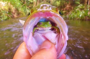 Frog-in-fish