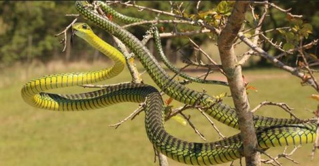 Top 10 Most Dangerous Snakes In Nigeria